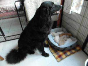 IK wil naar buiten, maar wilmijn puppy's niet alleen laten